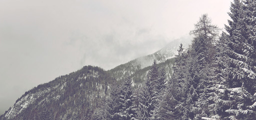 Snowy Alpine Peaks Covered with Evergreen Forest