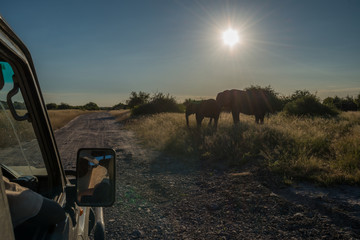 Two elephants at roadside seen from jeep