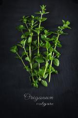Fototapeta fresh green oregano from above on a dark slate plate, sample text obraz