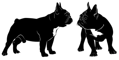 Dog Bulldog. The dog breed bulldog.Dog Bulldog black silhouette vector isolated on white background
