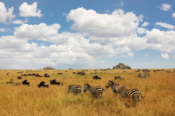 African zebras and antelopes on a background of beautiful clouds
