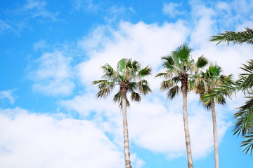 Green palms on blue sky background