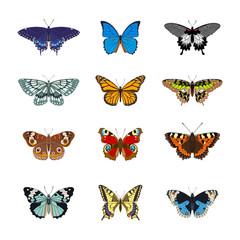 Set of realistc butterfly