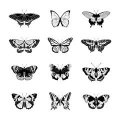 Set of realistc butterfly