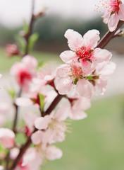 Close up of blossom