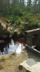 Wasser mitten im Wald