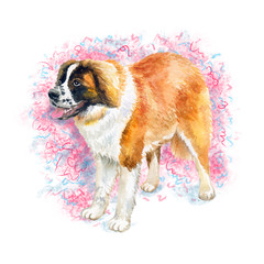 Watercolor closeup portrait of large Swiss Saint St Bernard breed dog isolated on abstract background. Large longhair Swiss Alps working dog. Hand drawn sweet home pet. Greeting card design clip art