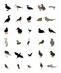 Set black and white silhouettes of birds: dove, duck, gull