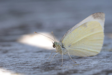 Butterfly resting on wood, close-up