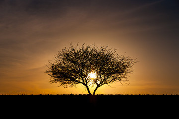 Silhouette of tree in desert at sunset