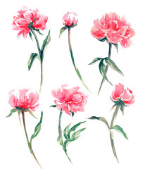 Birthday card with a watercolor peonies. (Use for Boarding Pass, invitations, thank you card.) illustration.