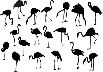 nineteen flamingo silhouettes isolated on white