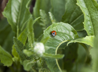 Ladybug at Work