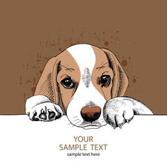 The Image portrait of the dog Beagle. Vector illustration.