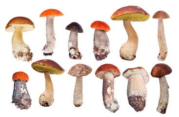 collection of twelve isolated edible mushrooms