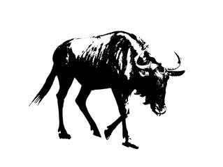 Blue wildebeest - Connochaetes taurinus, black and white vector