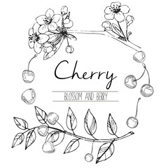 Vector round illustration of cherry blossom and berries. Hand drawn black and white engraved art in round border composition. Summer food for smoothie, cocktails, desserts and confectionery.
