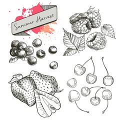 Vector set of summer harvest berries. Hand drawn vintage engraved art. Cherry? blueberry? strawberry? raspberry. Isolated on white background.