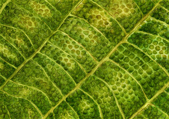 Texture of green leaf walnut. Watercolor botanical illustration, macro. Isolated on white background