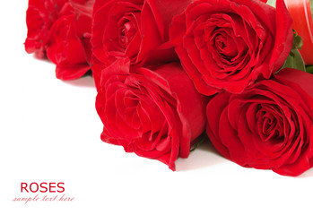 Red roses bouquet isolated on white background with sample text