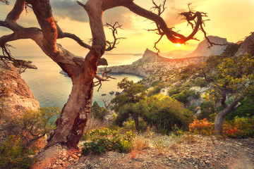 Wall Mural - Landscape with beautiful view on mountain valley and old tree, blue sky and sea at sunrise