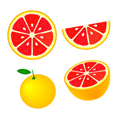 Collection of grapefruits, isolated on white background, vector illustration.