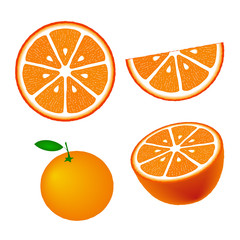 Collection of oranges, isolated on white background, vector illustration.
