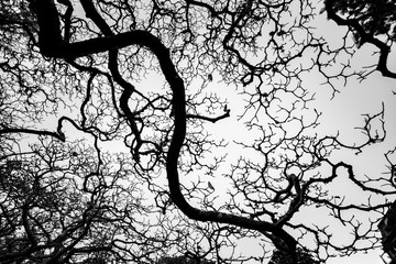 Autumn branch tree silhouette in black and white