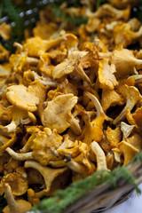 Close up of girolle mushrooms
