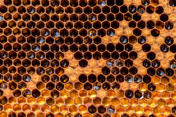 Honeycomb in the beehive