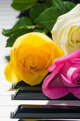 Background of yellow, pink, white roses on black and white piano