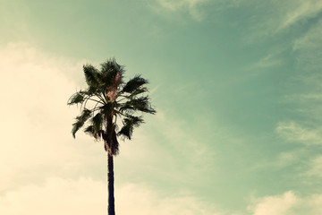Palm trees against sky.summer, vacation and tropical beach conce