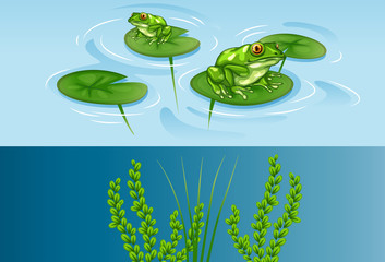 Frogs on water lily and underwater scene