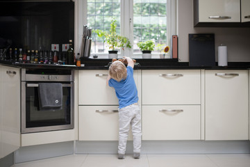 Young boy in kitchen, reaching up for freshly baked muffins, rear view