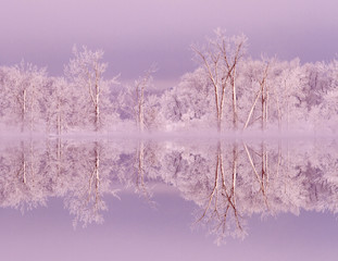 Canada, Ottawa, Ottawa River. Frosted trees mirrored on Shirley's Bay.