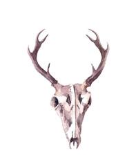 Deer skull. Watercolor