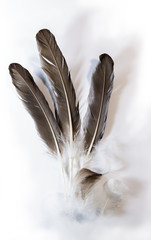 Floating Feather on Ground