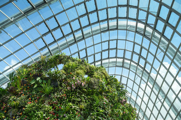 Rainforest dome at Garden by the bay