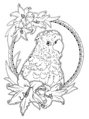 parrot and lilies coloring page