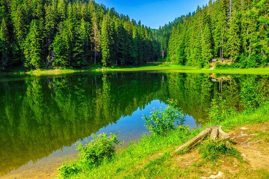 fresh morning near forest lake