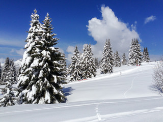 Snow covered mountain landscape and fur trees
