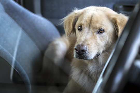 The dog wait owner in car