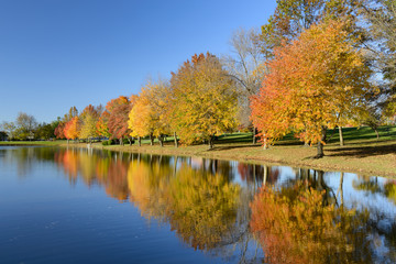 Wall Mural - Colorful Fall Trees with Reflections in Lake