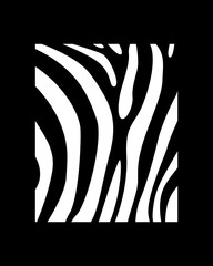 Vector print for t-shirt. Zebra on a black background