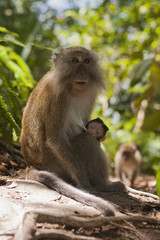 A monkey sitting with a baby in a forest
