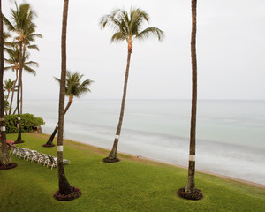 Palm trees and sun loungers at beach in Maui, Hawaii