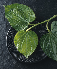Betel Leaf, close up
