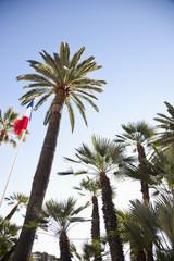 French flag on pole alongside palm trees,