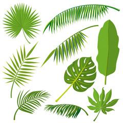 Tropical palm tree jungle leaves vector set. Leaf natural of jungle, green exotic leaves branch illustration