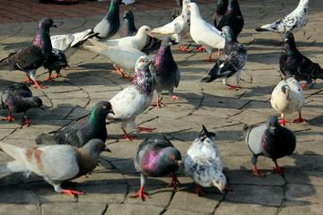 Doves in the Park